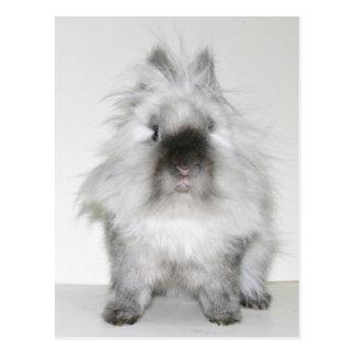 Mauvaise carte postale de lapin de jour de cheveux