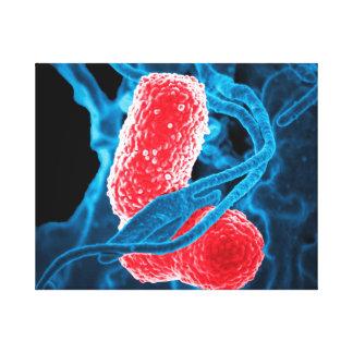 (MDR) Biologie d'art abstrait de pneumoniae de Toiles
