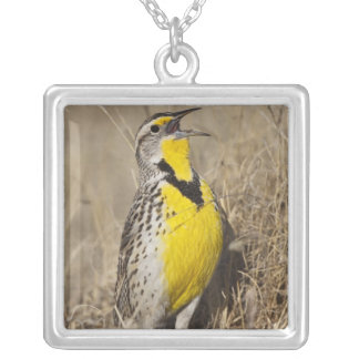 Meadowlark occidental (neglecta de Strunella) Collier