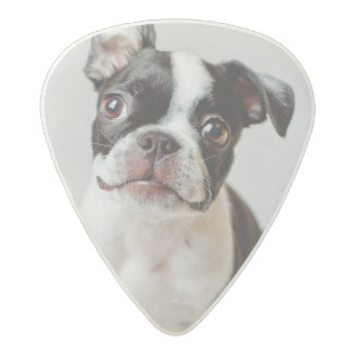 Médiator Acetal Boston Terrier