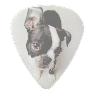 Médiator Acetal Chiot d'Edison Boston Terrier