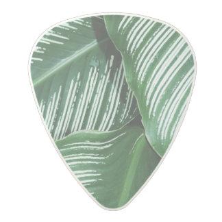 Médiator En Polycarbonate Le feuille vert avec le blanc barre le plan