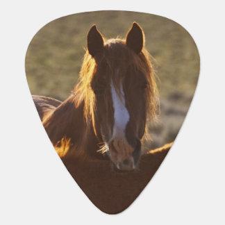 Médiators Adulte et colt sauvages de caballus d'Equus de