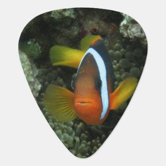 Médiators Anemonefish noir (melanopus d'Amphiprion) dedans