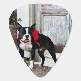 Médiators Boston Terrier - milles