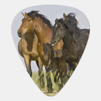 Médiators Chevaux sauvages sauvages 3 de caballus d'Equus de