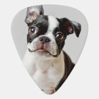 Médiators Chiot de chien de Boston Terrier