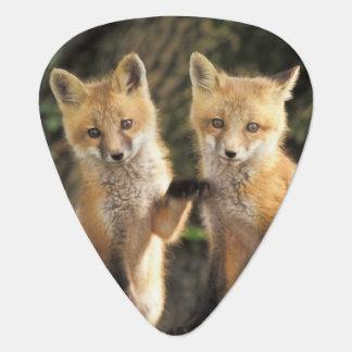 Médiators Chiot de Fox rouge devant le vulpes de Vulpes de