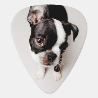 Médiators Chiot d'Edison Boston Terrier