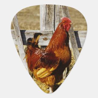 Médiators Coq de rouge d'île de Rhode