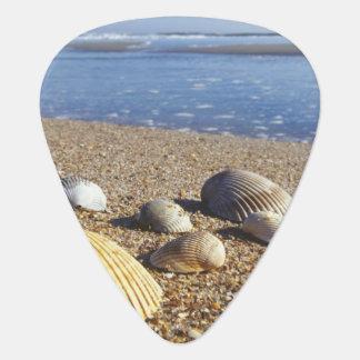 Médiators Coquilles côtières des Etats-Unis, la Floride, mer