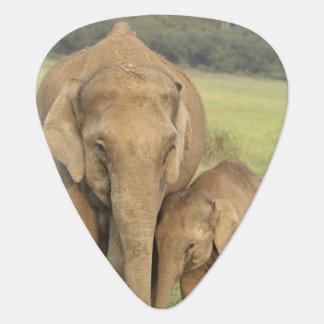 Médiators Éléphant indien/asiatique et jeunes un, Corbett