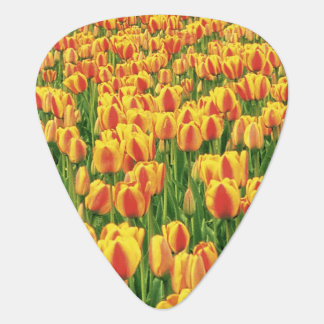 Médiators Fleur de tulipes de ressort devant la vieille