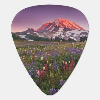 Médiators Fleurs colorées en parc national plus pluvieux