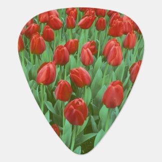 Médiators Fleurs de champ de tulipe pendant le ressort