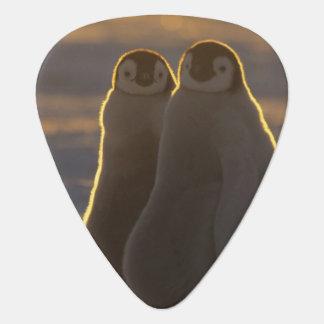 Médiators Forsteri de pingouins, d'Aptenodytes d'empereur),