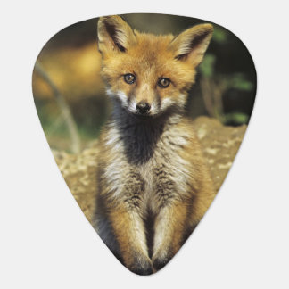 Médiators Fox rouge, vulpes de Vulpes, jeune au repaire,