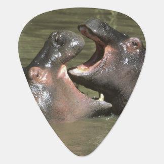 Médiators Hippopotame, (amphibius de H.), mère et jeunes