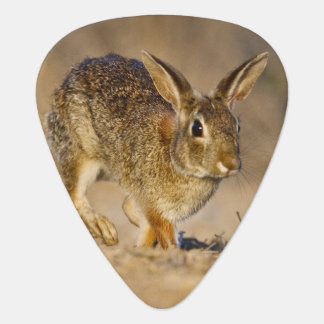 Médiators Houblonnage de lapin de lapin oriental