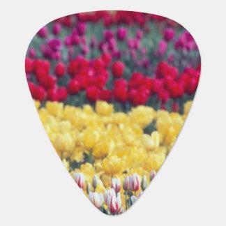 Médiators Jardin d'affichage de tulipe dans la vallée de