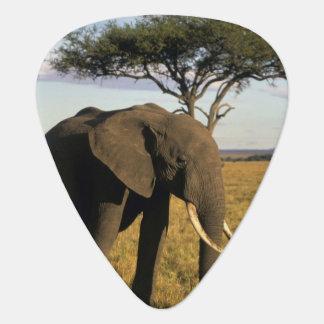 Médiators L'Afrique, Kenya, Maasai Mara. Un elehpant dans