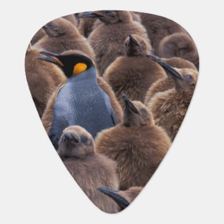 Médiators L'Antarctique, île du sud de la Géorgie, pingouins