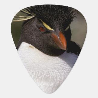 Médiators L'Antarctique, îles Sous-Antarctiques, sud 5