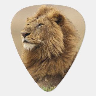 Médiators Le Kenya, masai Mara. Lion de mâle adulte sur le