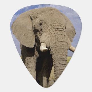 Médiators Le Kenya : Parc national d'Amboseli, éléphant