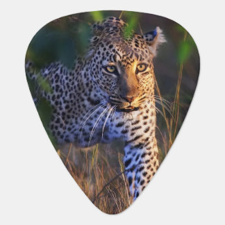 Médiators Léopard (Panthera Pardus) comme vu dans le masai