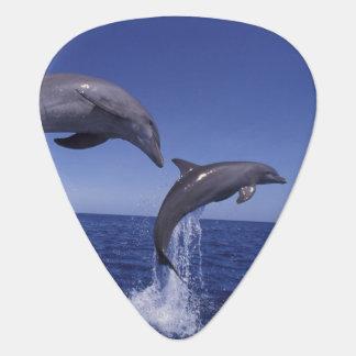 Médiators Les Caraïbe, Tursiops 7 de dauphins de Bottlenose