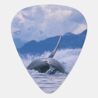 Médiators Les Etats-Unis, Alaska, réserve forestière de
