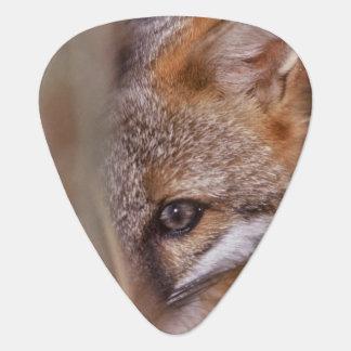 Médiators Les Etats-Unis, la Floride, Fox de marais
