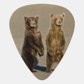 Médiators LES Etats-Unis. L'Alaska. Les petits animaux