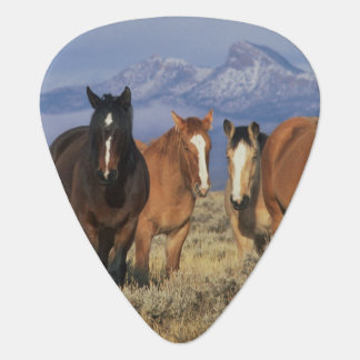 Médiators Les Etats-Unis, Wyoming, près du groupe de Cody de