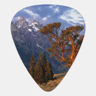 Médiators Les Etats-Unis, Wyoming, Teton grand NP. Un cèdre