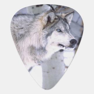 Médiators Lupus de loup, de Canis de bois de construction,