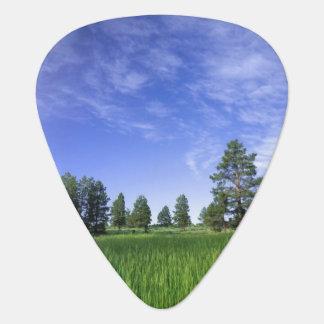 Médiators L'UTAH. LES Etats-Unis. Pins de Ponderosa Pinus