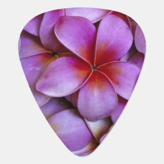 Médiators N.A., Etats-Unis, Maui, Hawaï. Fleurs roses de