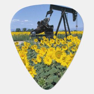 Médiators Na, Etats-Unis, le Colorado, tournesols, huile