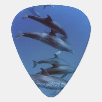 Médiators Océan atlantique a repéré des dauphins. Bimini,