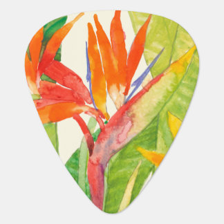 Médiators Oiseau des fleurs | du paradis tropical