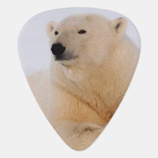 Médiators ours blanc, maritimus d'Ursus, se reposant sur