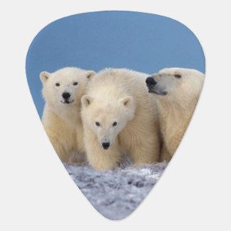 Médiators ours blanc, maritimus d'Ursus, truie avec des