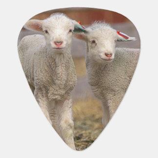 Médiators Paires d'agneaux commerciaux de Targhee
