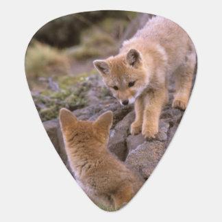 Médiators Paires sud-américaines de Fox gris (griseus de
