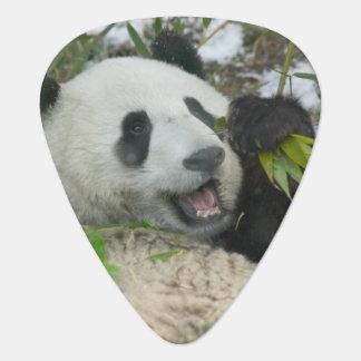 Médiators Panda mangeant le bambou sur la neige, Wolong,