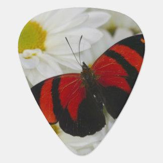 Médiators Photographie de Sammamish Washington du papillon