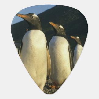 Médiators Pingouins de Gentoo, Pygoscelis Papouasie),