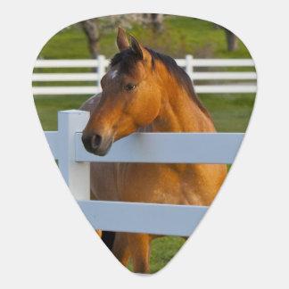 Médiators Poses de cheval par le verger de cerise à tête